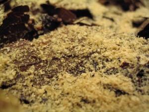 落葉の上の米糠