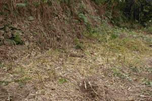 ノコギリで切った竹