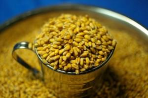 脱穀後小麦