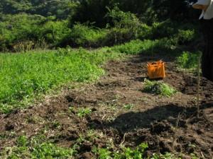 開墾を初めた一反畑