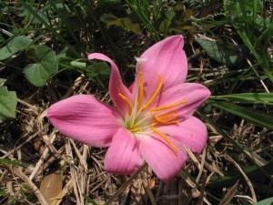 畑で見つけた花