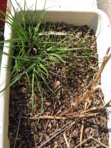 雑草の生い茂るニラ畑
