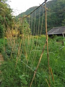 竹の支柱と麻紐