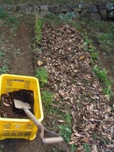落葉を蒔いた上に腐植を撒く